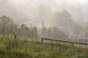 Heavy Rain, foto: Neil Tackaberry
