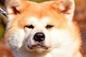 Dog, foto: Toshihiro Gamo