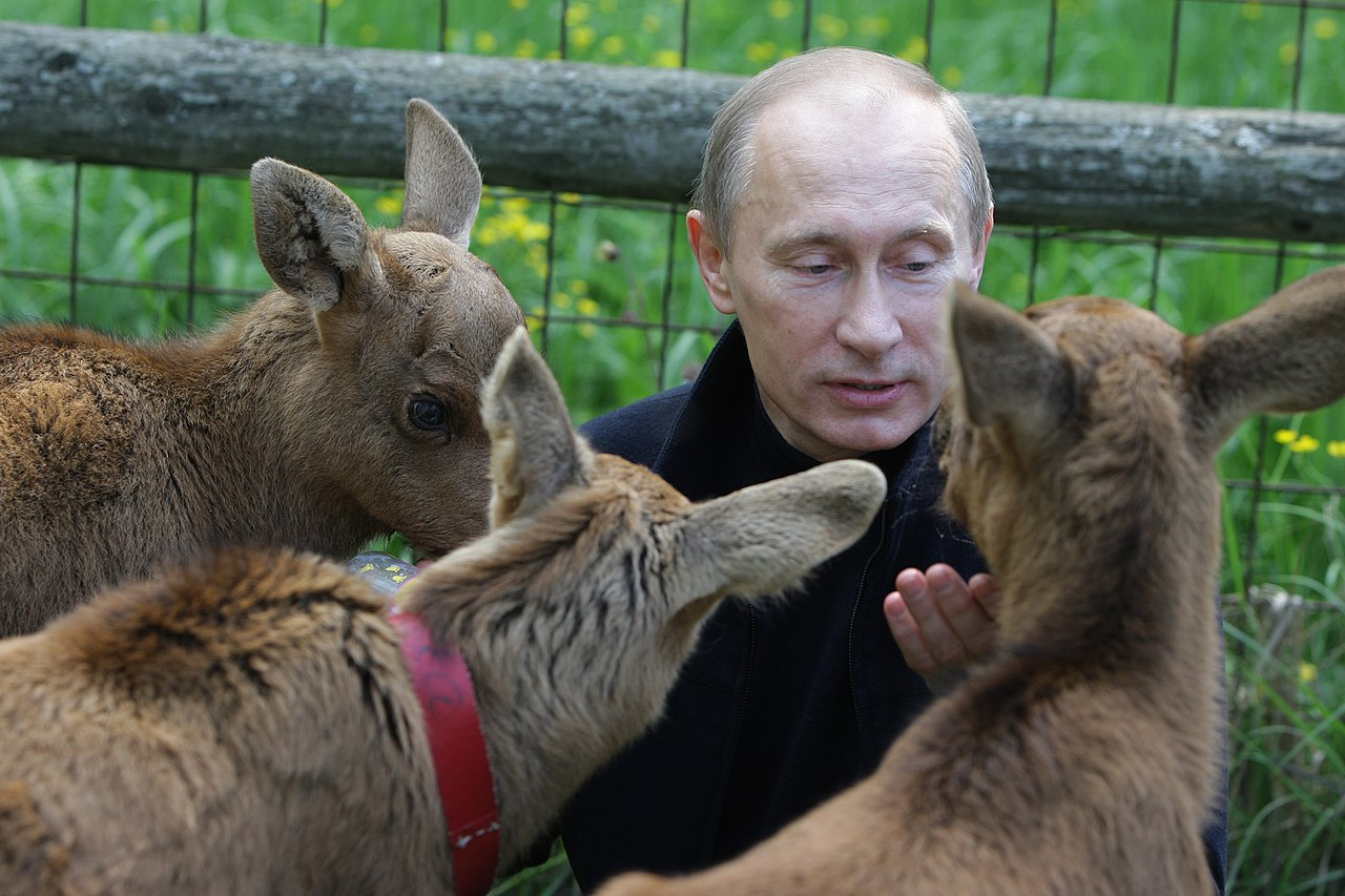 Putin playing with animals ahead of the annual World Environment Day by Prime Ministers Office