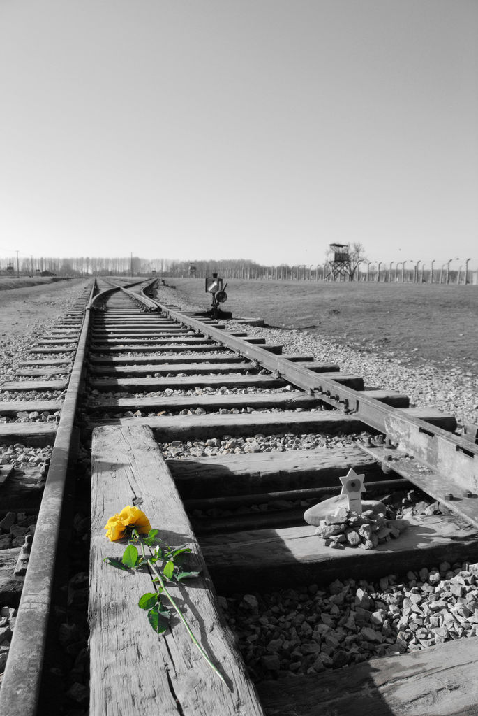 Yellow rose on rail tracks in Auschwitz concentration camp by Michal Osmenda